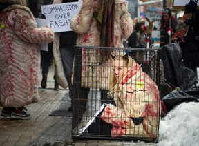 Rebecca Radmore an anti-fur activists with the Ottawa Animal Defense League was in a cage, protesting outside of Sporting Life along Bank Street on Saturday, Feb. 11.
