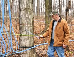 The unseasonably warm weather this week has left some Maple Syrup producers in the region feeling the heat. Pictured, George Roney of Spring Valley Maple Products checks his sap lines Feb. 24 after a week of warm temperatures has put a halt to his syrup operation. Galen Simmons/The Beacon Herald/Postmedia Network