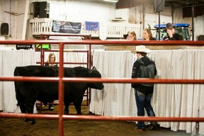A bull gets auctioned off at Lakeland College's Beef Day at the college's Equine Centre on Friday, March 24, 2017, in Vermilion, Alta. Taylor Hermiston/Vermilion Standard/Postmedia Network.