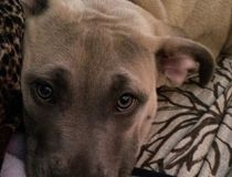 Stolen puppy rescued by dogged determined detectives