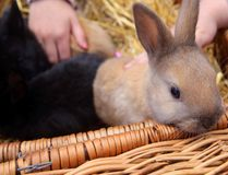 The peak season for surrendered and stray bunnies starts in June and July after being purchased by parents as Easter gifts for kids. (Luke Hendry/Postmedia Network/Files)