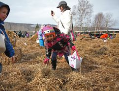 Kids of all ages ran through the hay searching for plastic eggs filled with Easter goodies at Dunvegan Garden's annual Easter egg hunt Saturday, April 15, 2017. Olivia Condon/ Fort McMurray Today/ Postmedia Network
