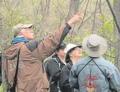 Guided hikes are an excellent aspect of most spring birding festivals since you have the benefit of a leader's expertise in species identification and hot spot knowledge. Pete Read, left, is a London-based birding expert who has been part of the Point Pelee hike leaders team each May for more than a decade. (PAUL NICHOLSON/SPECIAL TO POSTMEDIA NEWS )