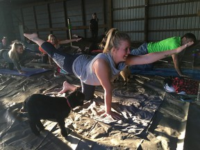 Danielle Morgan strikes a sunbird yoga pose with Squeaker the kid close by. Squeaker and other curious baby goats made the rounds Wednesday at Full Circle Ranch's first sunset goat yoga session. (Jennifer Bieman/Times-Journal)