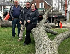 Ron Vankoughnet, Town of Greater Napanee Public Works manager, Dan MacDonald, manager of parks and facilities, and Tara Bruce, the town's administrative assistant of infrastructure services, stand with one of two trees cut down in the town on Tuesday after they were recommended for removal based on their age and condition. The trees will be used in children's play structures. (Jan Murphy/The Whig-Standard)