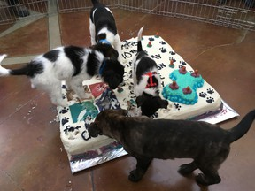 Four puppies have earned international fame after a video of the dogs destroying a custom cake at the Edmonton Humane Society's 110 Anniversary celebration on April 29, 2017, was shared across the United States. Supplied