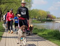 Stratford resident Georgia Neely, and her dog, Lucy, saunter alongside the Avon River during the Walk for Alzheimer's on Saturday, May 13, 2017 in Stratford. (Terry Bridge/Beacon Herald)