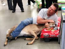 The Tuesday, May 16, 2017, photo, provided by Stephanie L Koljonen shows Tom Grasswick, a customer at a Walmart store in Wadena, Minn., holding onto a confused white-tailed deer that wandered into the store. (Stephanie L Koljonen via AP)