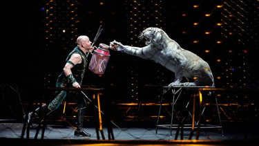 Ringling Bros. tiger trainer Taba Maluenda performs with a white tiger during a show, Thursday, May 4, 2017, in Providence, R.I. (AP Photo/Julie Jacobson)