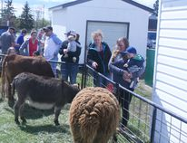 Petting Zoo on E.E. Oliver School grounds organized by Mommy and Me, in conjunction with Parent Link, funded by FCSS