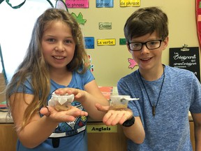 Grade 4 students at Ecole Ste-Therese in Val Therese are discovering the evolution and transformation of the butterfly by observing the life cycle of these insects, from caterpillar to the adult stage. Supplied photo