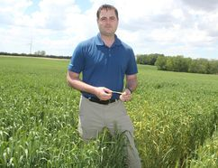 Wheat stripe rust has become more prevalent in southern Ontario over the last two years. Richard Anderson, a wheat grower from Thamesville, said stripe rust has come in earlier than normal and can have devastating effects on yield if not caught within five to seven days. (Laura Broadley/Times-Journal)