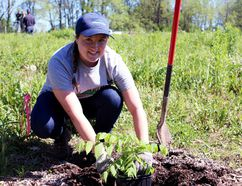 UTRCA summer student Jessica Penz plants a butternut tree at the Butternut Seed Orchard in Innerkip on Wednesday. (BRUCE CHESSELL/Sentinel-Review)