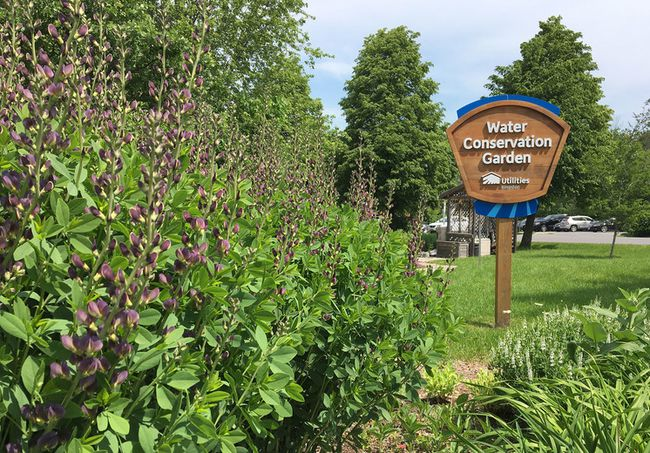 Water conservation gardens in full bloom | The Kingston Whig-Standard