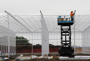 Work continues on the Aurora Sky green houses at the Edmonton International Airport on Friday June 16, 2017, in Edmonton.