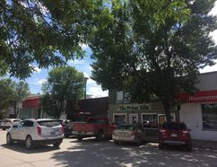 The trees on the west side of Carman's 1st Street SW business section will be the first to go under the town's new sidewalk refurbishment project. (EMILY DISTEFANO/VALLEY LEADER)