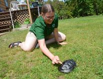 Amy Mackie, a member of the Leeds Grenville Stewardship Council, plays with her pet turtle Raphael at her home in North Augusta on Wednesday.
