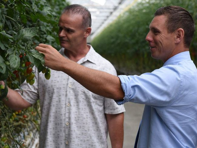 Cecelia Acres owner Chip Stockwell (left) looks at tomatoes in his Kingsville, Ont., greenhouse with Ontario PC Leader Patrick Brown on Monday, July 10, 2017. (SUBMITTED/PHOTO)