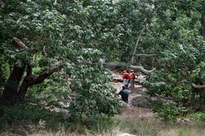 Tonto Search and Rescue volunteers search for missing swimmers near the Water Wheel Campground on Sunday morning, July 16, 2017, in the Tonto National Forest, Ariz., following Saturday's deadly flash-flooding at a normally tranquil swimming area in the national forest. (Alexis Bechman/Payson Roundup via AP)