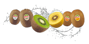 Zespri Kiwifruit is available all over North America.