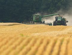 Winter wheat harvest is in full swing around London. (Free Press file photo)