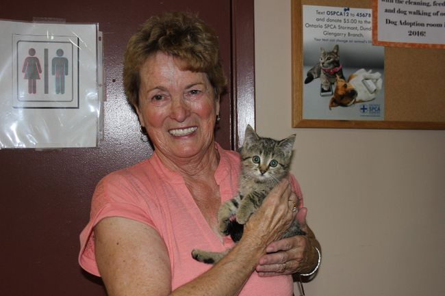 <p>Madeleine Bronner holds one of the many kittens up for adoption at the OSPCA on Boundary Road on Friday, July 28, 2017, in Cornwall, Ont.</p><p>