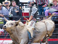 Intelligencer file photo A rider attempts to hold on for eight seconds during a bull riding competition at the Tweed Stampede on Sunday August 2, 2015 in Tweed. The stampede returns this weekend.