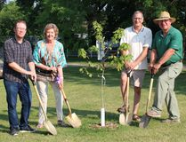 (From left; parks and recreation manager Chris Hornby, Lt. Governor Janice Filmon, Coun. Danny Luprypa and Mayor Randy Woroniuk were on hand to plant the Regal Celebration maple tree on Gimli's beach July 27. (Juliet Kadzviti/The Interlake Spectator/Postmedia Network)