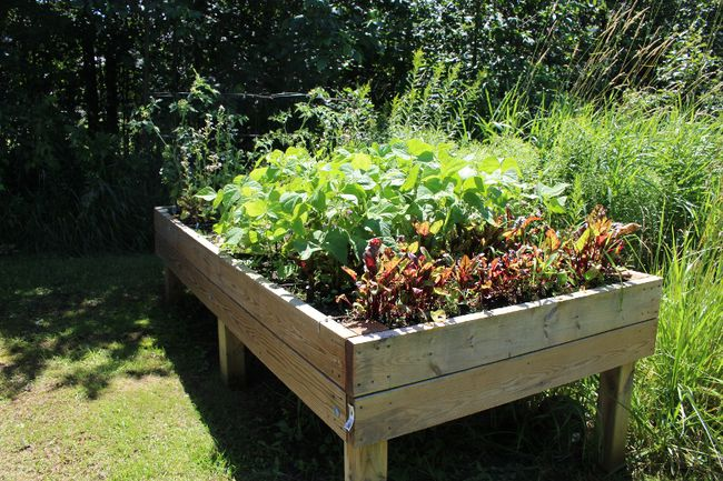 One of nine community garden beds at the Salvation Army community gardens in Wiarton, July 27. Photo by Zoe Kessler/Wiarton Echo