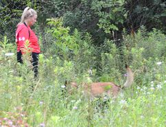 Susan Read and her human remains detection dog Zappa search a property on East Bayshore Road in Owen Sound on Wednesday. The search was part of Nick Oldrieve's attempts to find the remains of Lisa Maas, who was last seen in 1988. (Rob Gowan The Sun Times