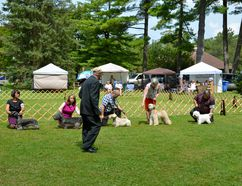 Judge Bruce Owen takes a careful look at dogs competing in the sixth and final show of Grey-Bruce Kennel & Obedience Club's annual championship dog shows in Harrison Park in Owen Sound which wrapped up Thursday. (Scott Dunn/The Sun Times)