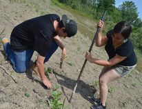 Chase Waddilove, left, and Samantha Doxtator, right, plant a plug at the old quarry between Morpeth and Rodney. They're part of the Antler River Guardians from the 4 Directions, a First Nations summer youth group that encourages land stewardship and conservation.