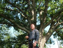 Arborist Trevor Pachkowski is putting together a team of arborists from across the province to ensure an ancient white oak tree at Lyon's Creek Cemetery remains healthy for centuries to come, on Thursday August 10, 2017. Allan Benner/St. Catharines Standard/Postmedia Network