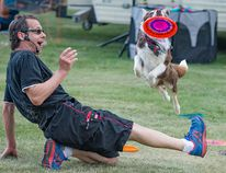Dog trainer Steve Diamond of Diamond Disc Dogs takes his border collie Rufus through his paces to the joy and amazement Saturday during Potato Fest at Rotary Republic Park. Rufus was a crowd favourite, even when he failed to catch a thrown frisbee. Diamond's rapport with his audience and his dogs' willingness to perform and entertain - and be petted - is why Diamond Disc Dogs are invited back to Potato Fest each year. (Mickey Dumont/HERALD LEADER)