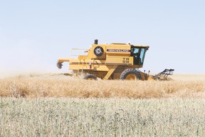 A farmer combines canola on land located 7.5 kilometres north of Vulcan Saturday, Aug. 26.