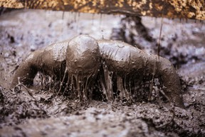 A participant gets muddy during the 2015 Big Bang Mud Run. The event is being run for the third straight year (File Photo).