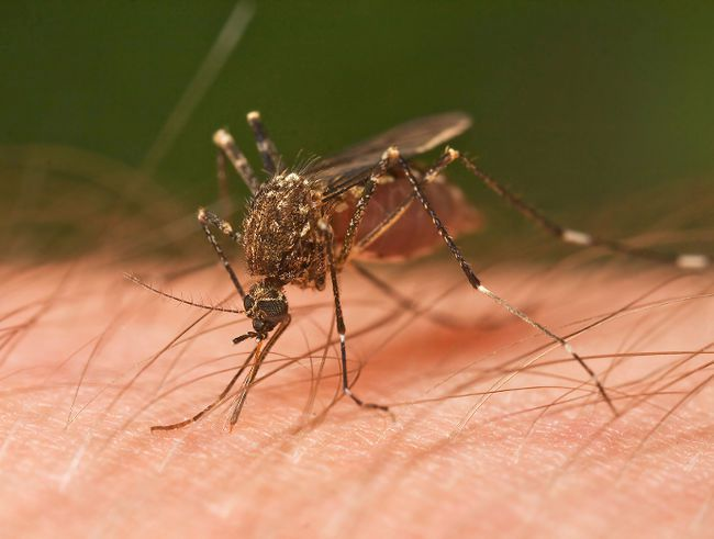 Postmedia network file photo