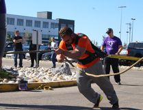 Photos by Keenan Sorokan Reporter/ Examiner - Jeremy Reay competes the truck pull event at Spurce Grove's Strongest.