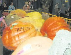 Monstrous-sized veggies are in competition at the Norfolk County Fair. (Jim Fox/Special to Postmedia News)