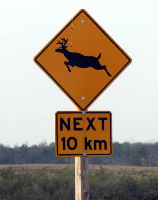 This animal crossing sign was spotted along the Trans-Canada Highway in Saskatchewan.
