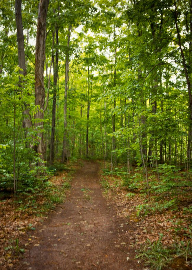 Submitted photo A woodlot walkthrough later this month has been organized by the Quinte Chapter of the Ontario Woodlot Association.