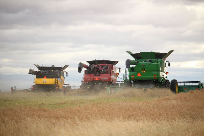 This year's Share the Harvest campaign involved about 40 volunteers and almost a dozen combines to harvest the canola from 150 acres located along Range Road 224 near Gibbons. The crops are sold and matching government grants are sent to world hungry projects organized by the Canadian Foodgrains Bank.