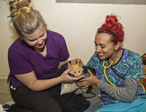 Registered veterinary technician Randi Young (left) of Woodstock and veterinary assistant Natalia Hanson of Hamilton comfort a cat following a spaying procedure on Sunday. Brian Thompson/Postmedia News