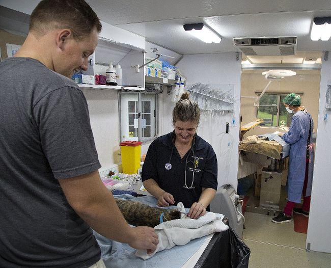 Ryan Huurman watches as registered veterinary technician Michelle Burgoyne preps a cat for surgery, while Dr. Jennifer Farr (right) of Brantford performs a procedure on Sunday October 15, 2017.  Simcoe area resident Catie Metcalfe arranged to bring in a mobile SPCA unit to perform over 40 spaying and neutering procedures on feral cats and ones which owners could not otherwise afford to have the surgery done. Brian Thompson/Brantford Expositor/Postmedia Network