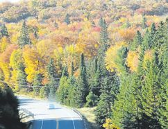 Vibrant colours dot the countryside across Ontario with the fall leaf spectacle. (Barb Fox/Special to Postmedia News)