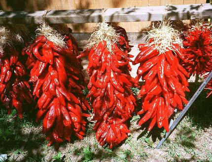 Chile peppers, to spice up Wordwise a bit. Postmedia Network.