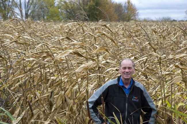 Coun. Bill Armstrong wants London to host the 2020 International Plowing Match in this corn field at Crumlin Sideroad and Trafalgar Street in London. (DEREK RUTTAN, The London Free Press)