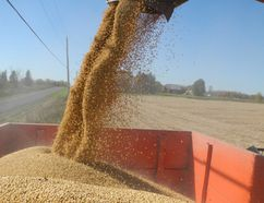 The soybean harvest in Ontario in 2013. The Grain Farmers of Ontario is studying the possibility of having a small-scale, niche-style soybean processor established in the province. (File photo/Postmedia Network)