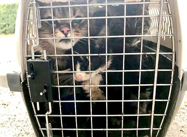 Three cats were found Thursday afternoon stuffed in a crate jammed into a 10-foot cedar hedge. The cats were reported to be dirty, hungry and cold. They have been placed with the North Bay and District Humane Society.