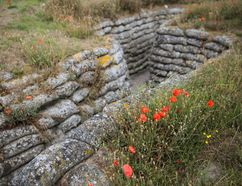 Jack Taylor/Getty Images Wild poppies grow in the 'Trench of Death', a preserved Belgian First World War trench system in Diksmuide, Belgium on July 14, 2017. The poppy has become an internationally recognized symbol of remembrance after it grew in the war-ravaged and muddied landscape of Belgian Flanders. The sight of the poppy growing by the graves of soldiers inspired Canadian soldier John McCrae to write one of the most famous World War One poems, 'In Flanders Fields'.